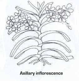 axillary.jpg