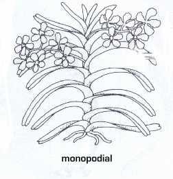 monopodial.jpg